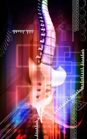 backbone    photo