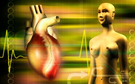 Heart and human body    photo