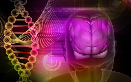 Human brain and dna  Stock Photo - 4623254