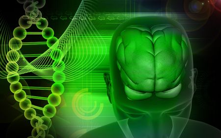 Human brain and dna Stock Photo - 4623248
