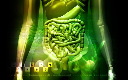 human digestive system and Skelton  Stock Photo - 4624854