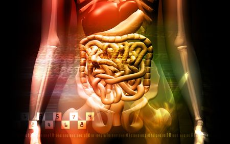 human digestive system and Skelton Stock Photo - 4626482