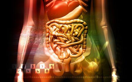 sistema digestivo: sistema digestivo humano y Skelton