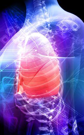 cuerpo femenino: Cuerpo humano y los pulmones Foto de archivo