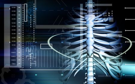 columna vertebral humana: Columna vertebral humana