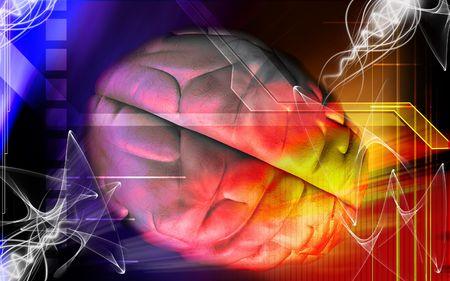 medulla: Human brain