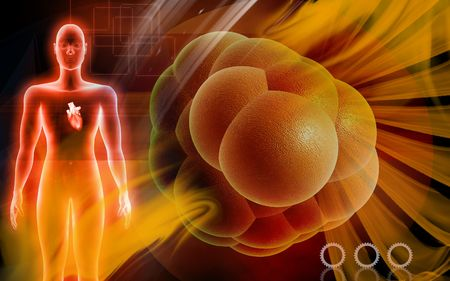 Digital illustration of heart in human body   and cell  illustration