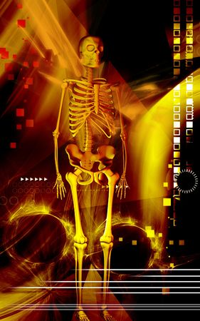 Digital illustration of human skeleton in colour background