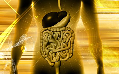 Digital illustration of digestive system in colour background illustration