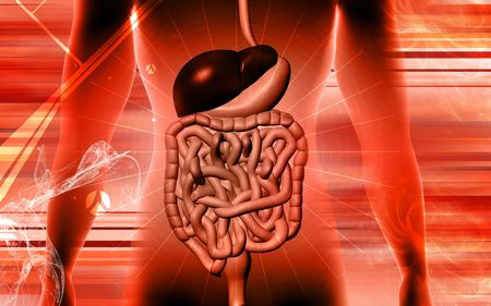 Digital illustration of digestive system in colour background Stock Illustration - 5203058