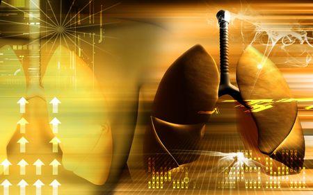 aparato respiratorio: Ilustraci�n digital de los pulmones humanos en color