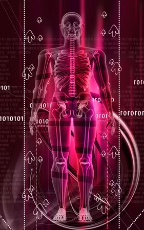 transparent body: Digital illustration of  a   human body in colour background