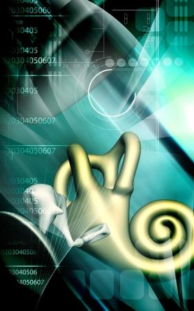 malleus: Digital illustration of  ear in colour  background