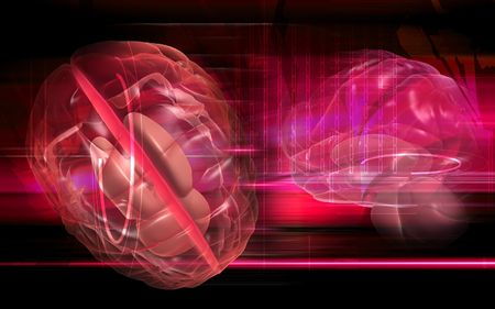 oblongata: Digital illustration of  brain in colour  background   Stock Photo