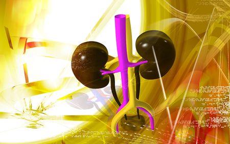 Digital illustration of  kidney in colour  background  Stock Illustration - 5299882