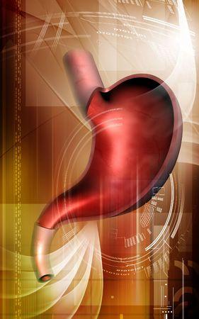 Digital illustration of  stomach  in colour  background Stock Illustration - 5299951
