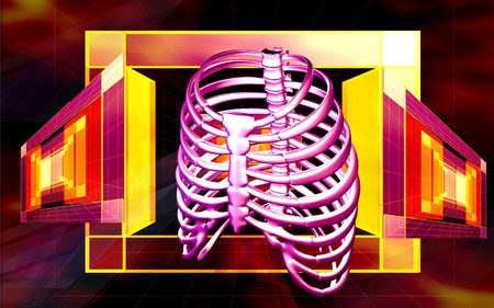 rib cage: Digital illustration of rib cage in color background