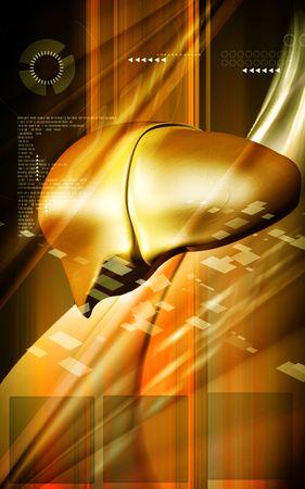 Digital illustration of  liver  in  colour  background Stock Illustration - 5383393