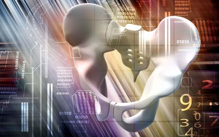 ileum: Digital illustration  of pelvic girdle in colour background