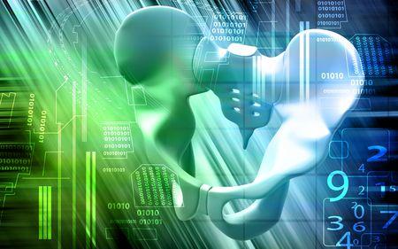 pubis: Digital illustration  of pelvic girdle in colour background