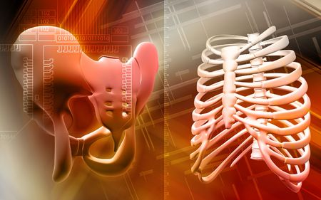 ileum: Digital illustration  of pelvic girdle and ribcage in colour background