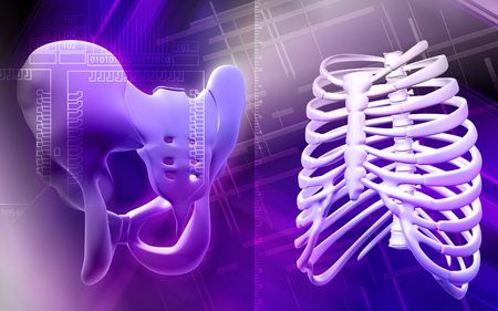 Digital illustration  of pelvic girdle and ribcage  in colour  background  illustration