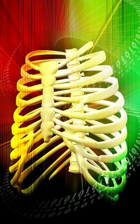 rib cage: Digital illustration of  rib cage  in colour  background