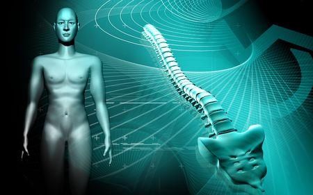 gital illustration  of back bone human body in colour background    illustration