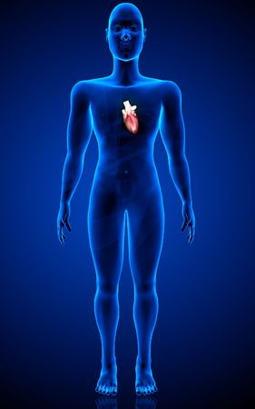 Digital  illustration  of  human   body  and heart   in  colour  background   illustration