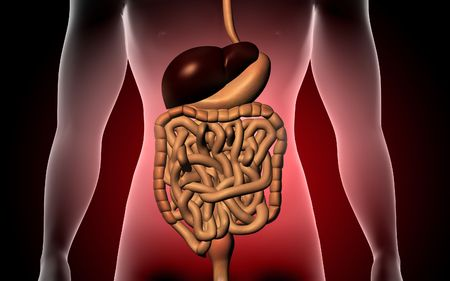 Digital illustration of human body and digestive system  Stock Photo