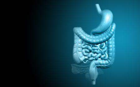 sistema digestivo: Ilustraci�n digital del sistema digestivo humano Foto de archivo