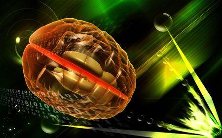 Digital illustration of  brain in colour  background   illustration
