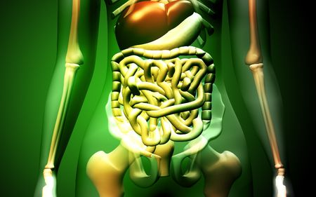 Digital illustration of human digestive system in colour background Stock Illustration - 5577255