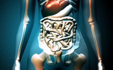 Digital illustration of human digestive system in colour background Stock Illustration - 5577243