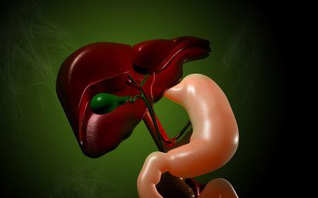 Digital illustration of  liver   in  colour  background Stock Illustration - 5577169