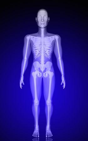 Digital illustration of  human body in colour  background   illustration
