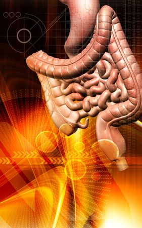 Digital illustration of human digestive system in colour background  illustration