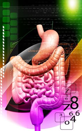 Digital illustration of human digestive system in colour background Stock Illustration - 5609625