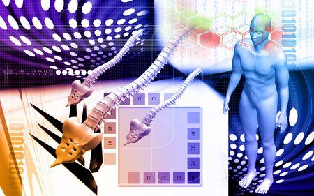 Digital illustration  of back bone and human body in    colour background    illustration