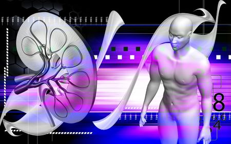 Digital illustration of  human body and kidney in colour  background   illustration