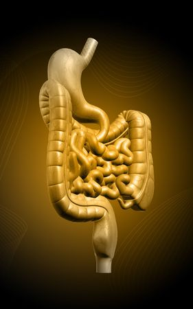 Digital illustration of human digestive system n colour background Stock Illustration - 5651557