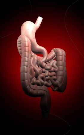 Digital illustration of human digestive system n colour background  illustration