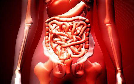 Digital illustration of human digestive system in colour background Stock Illustration - 5651644