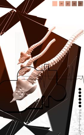 Digital illustration  of back bone in    colour background    illustration