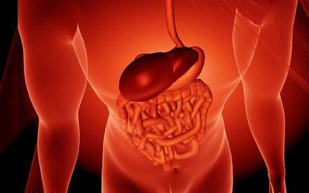 Digital illustration of human digestive system in colour background  Stock Illustration - 5734870