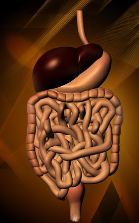 Digital illustration of human digestive system in colour background  Stock Illustration - 5734954