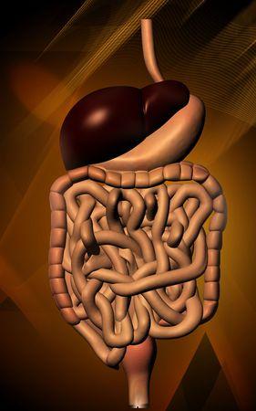 Digital illustration of human digestive system in colour background Stock Illustration - 5734954