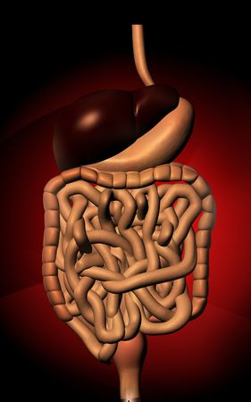 Digital illustration of human digestive system in colour  background Stock Illustration - 5758401
