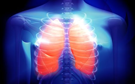 organs: Digital illustration of a human body and lungs  Stock Photo