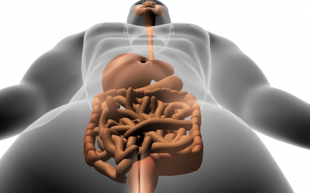 digestive system: Digital illustration of human body with  digestive system